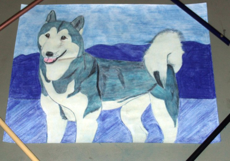 A drawing of my Husky dog Natasha.