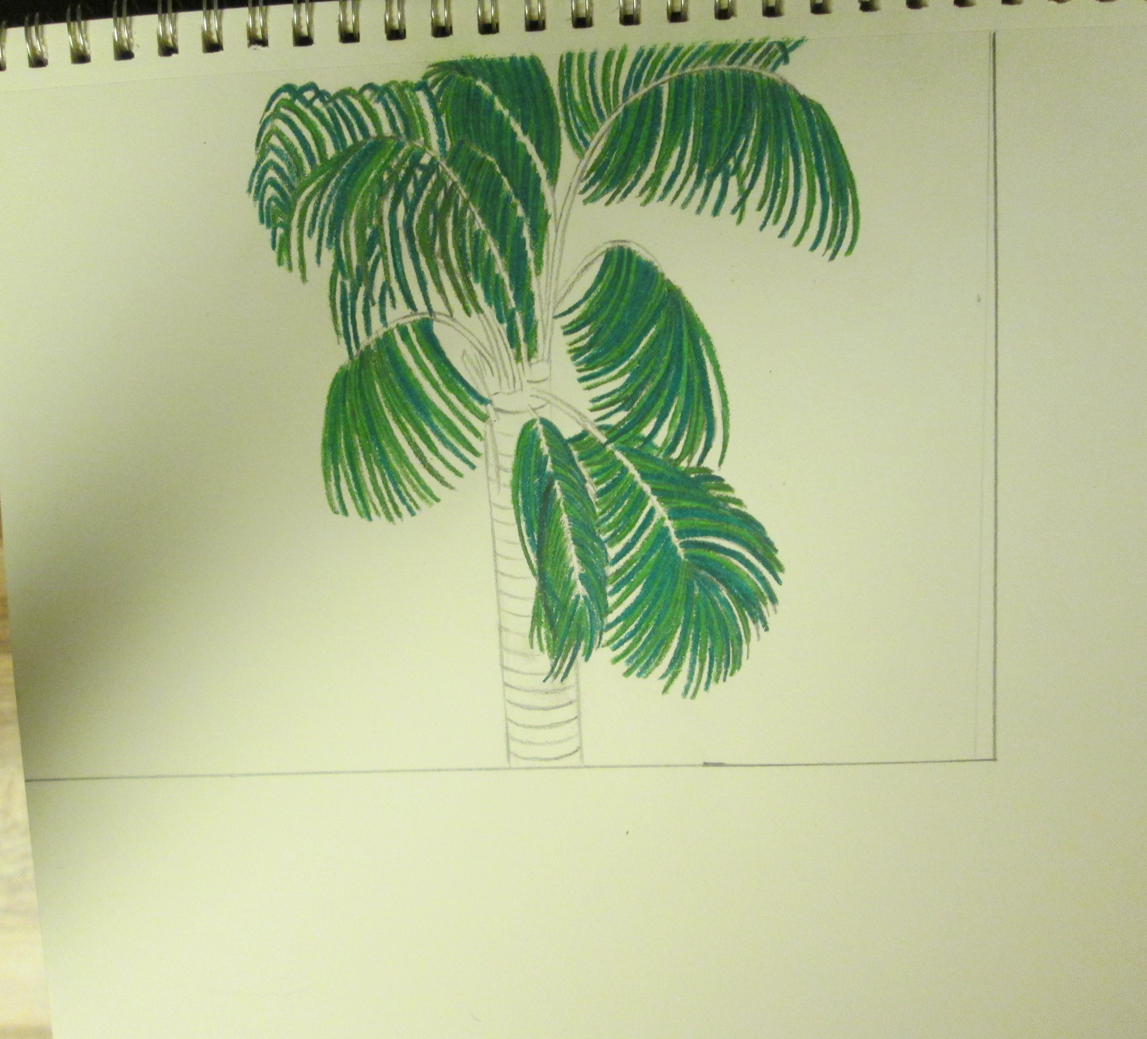 Drawing A Palm Tree With Colored Pencils – Sweetbearies Art Projects