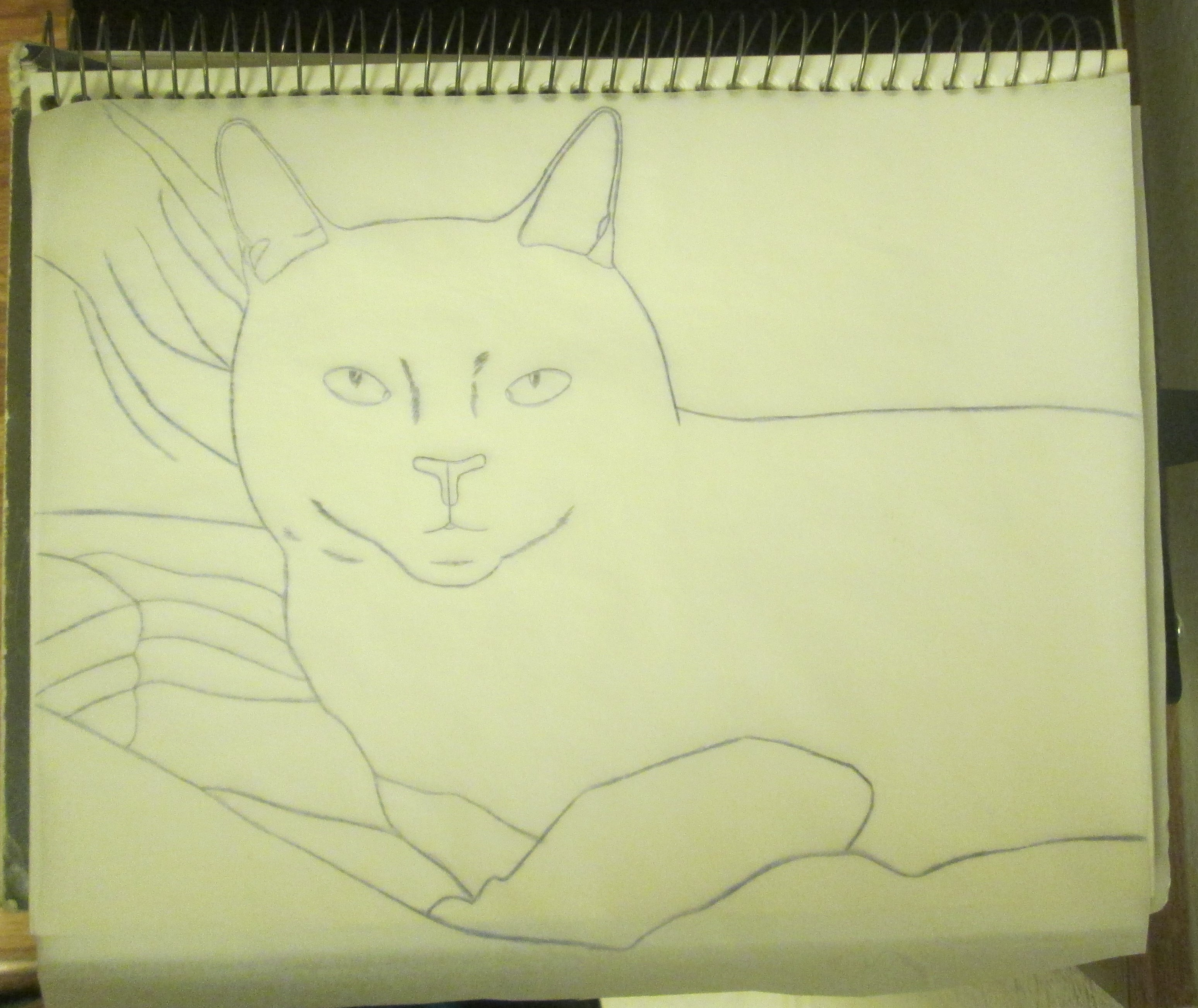 Here I have finished tracing over the rough draft sketch of the cat.