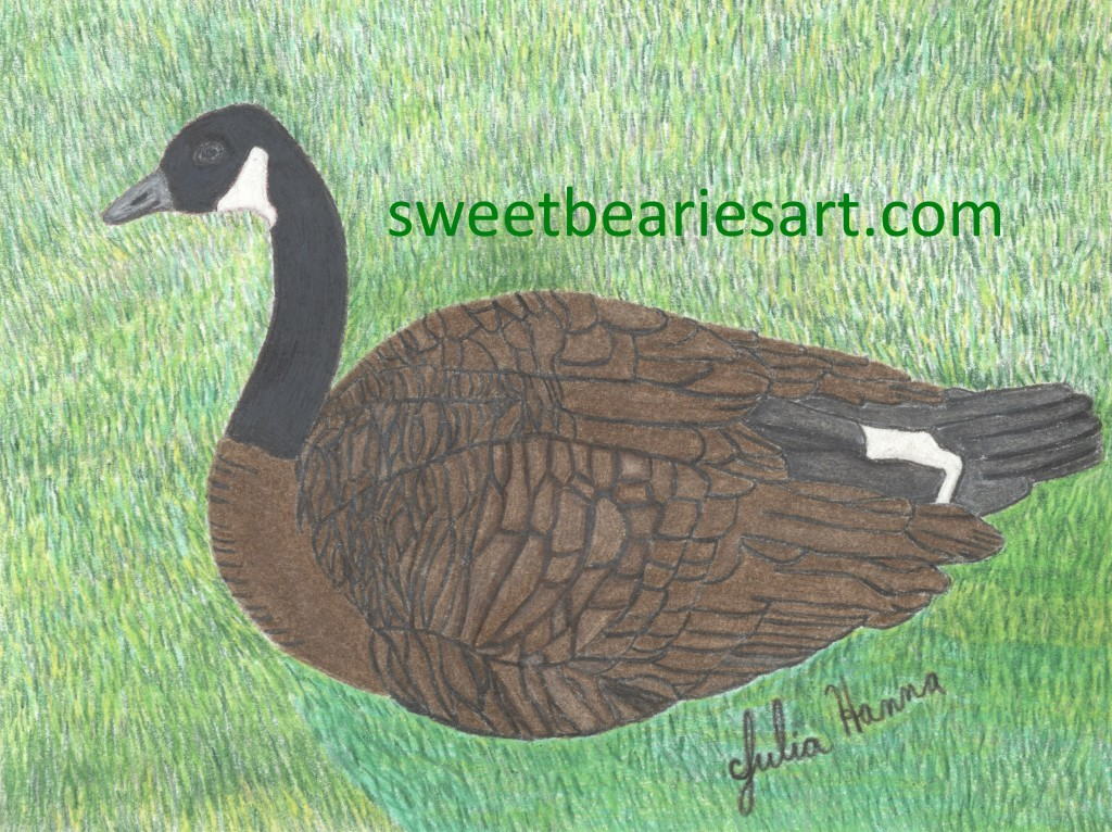 I have finished the Canadian goose drawing.